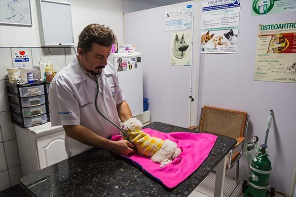 atendimento veterinário