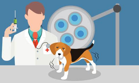Vacinas para cães e gatos
