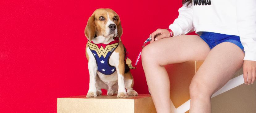 Peitoral Air para Cachorros Mulher Maravilha