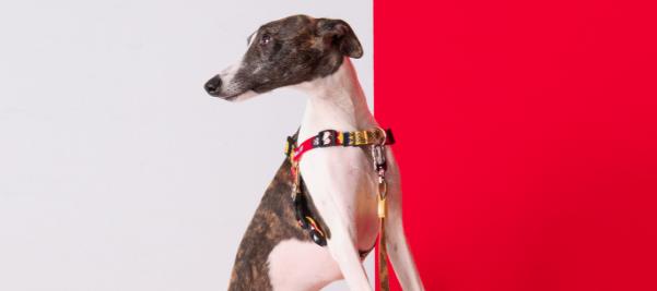Peitoral Anti Puxão para Cachorros Mulher Maravilha