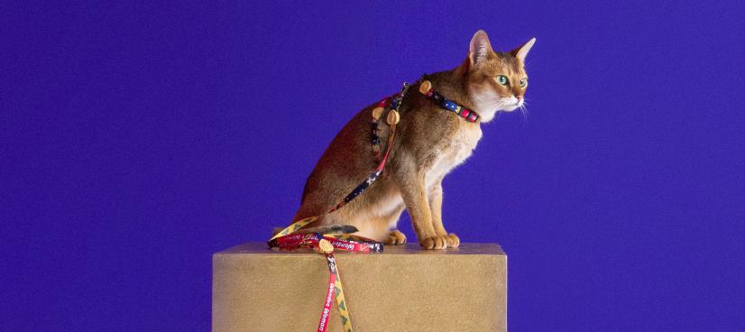 Peitoral com Guia para Gatos Mulher Maravilha