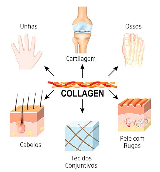 Infográfico que mostra onde o colágeno atua em nosso corpo.