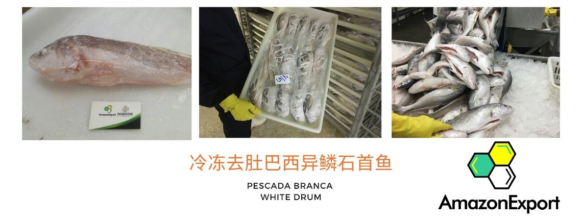 Process Amazon Export Fish Brazil