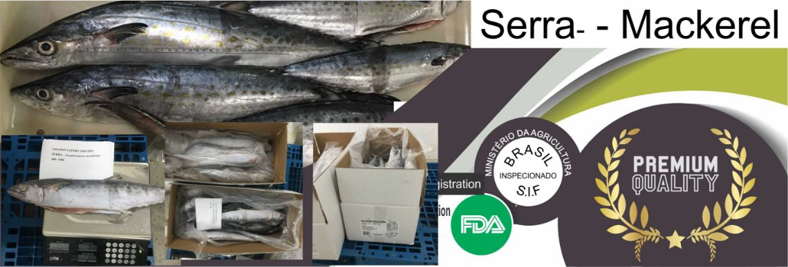 Serra Spanish Mackerel - Amazon Export