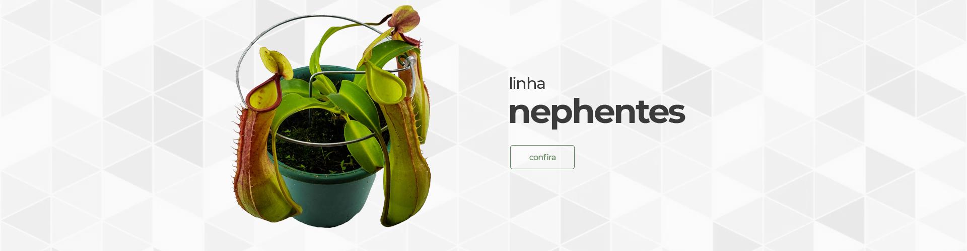 Nephentes