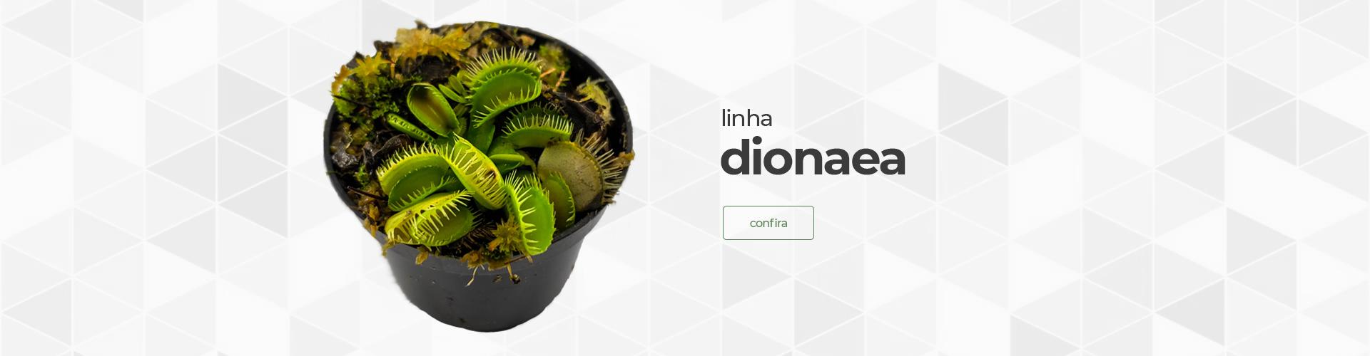 Dionaeas