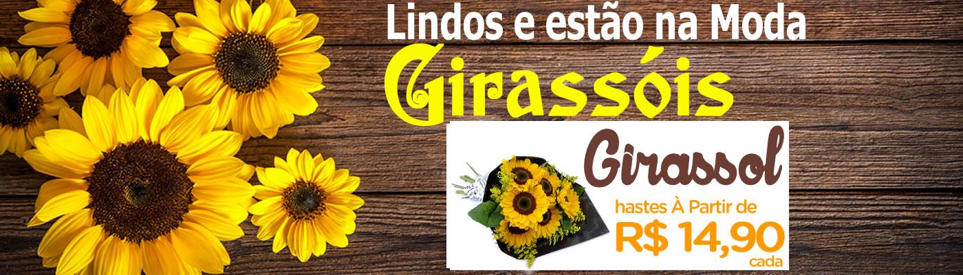 Girassóis