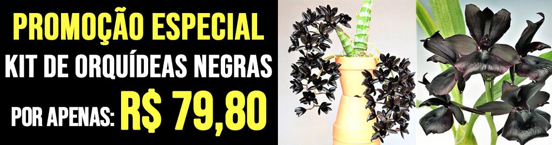 Kit Orquídea Negra