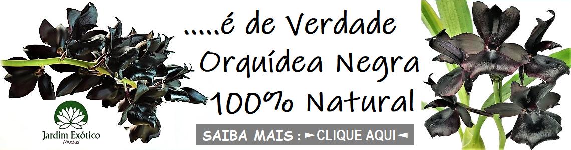 NEGRA ORQUIDEA