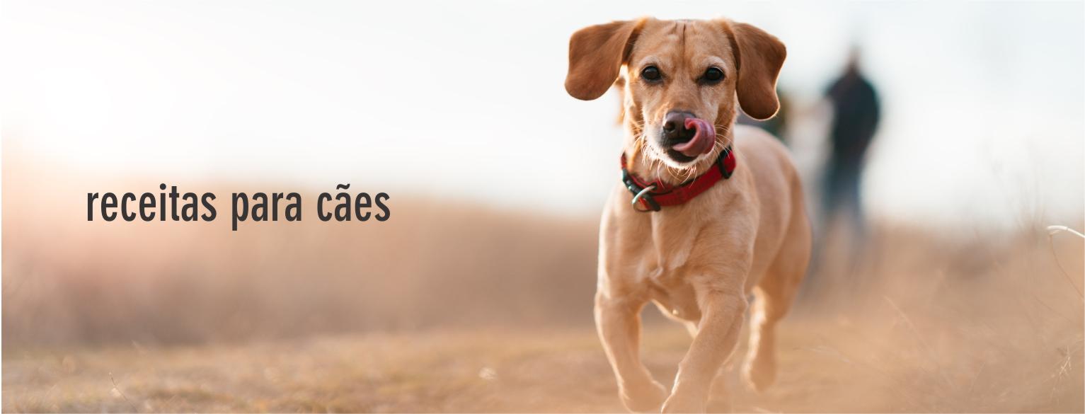para cães