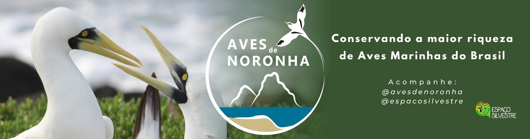 Logo central (verde)