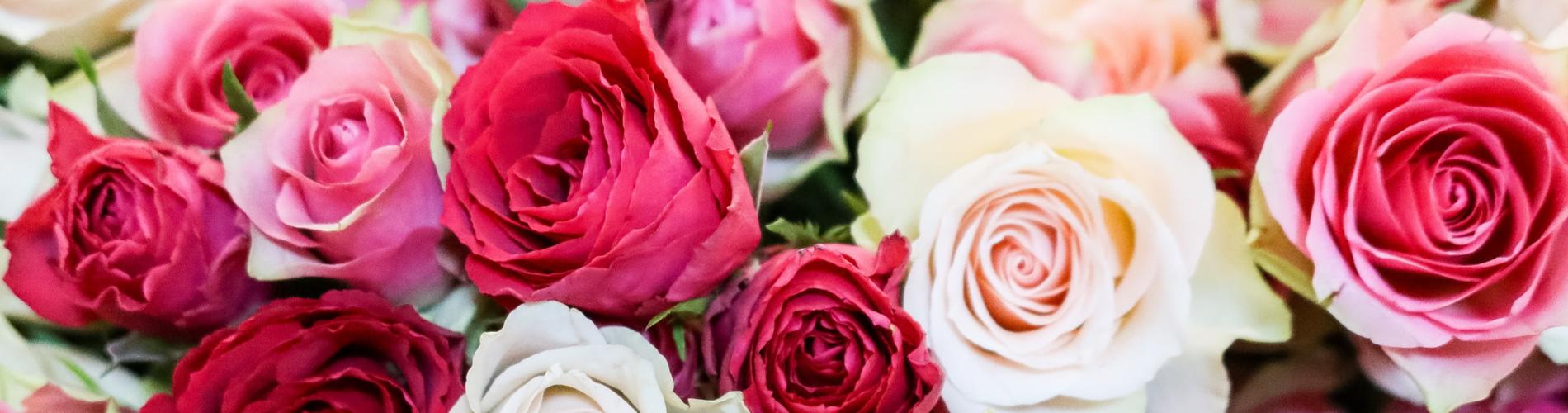 flores tamanho fino