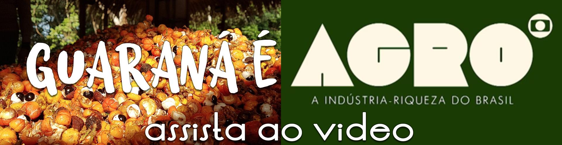 Guaraná é Agro