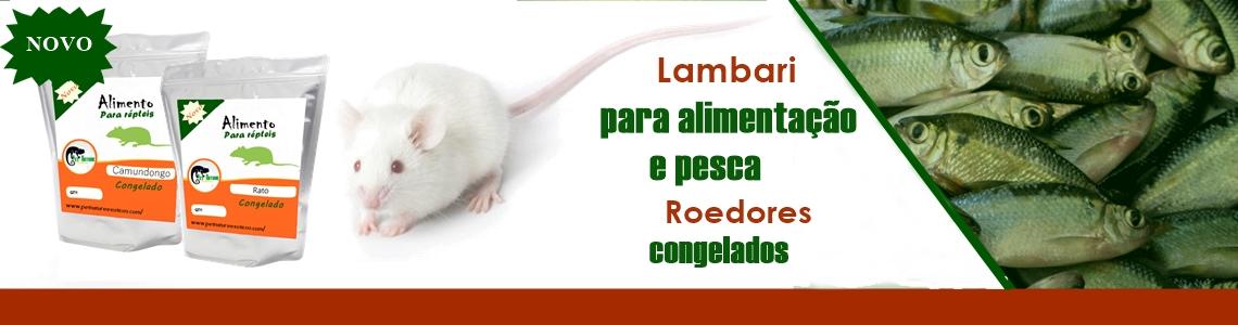 rato e lambari