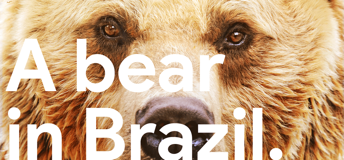 Full Banner A Bear in Brazil