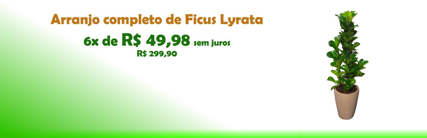 Lyrata