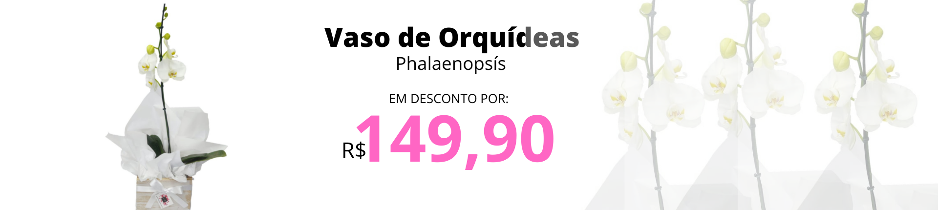 ORQUÍDEAS PHALAENOPSIS FQ
