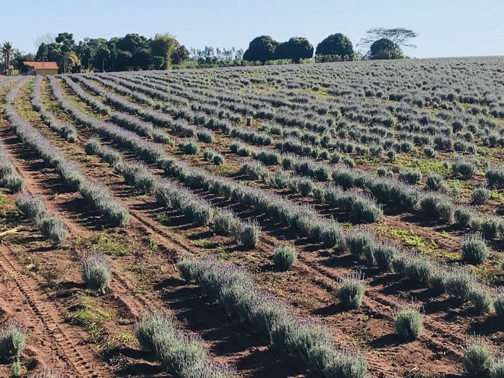 plantação 2