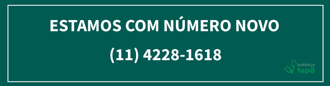 Novo Número