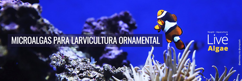 Larvicultura Ornamental