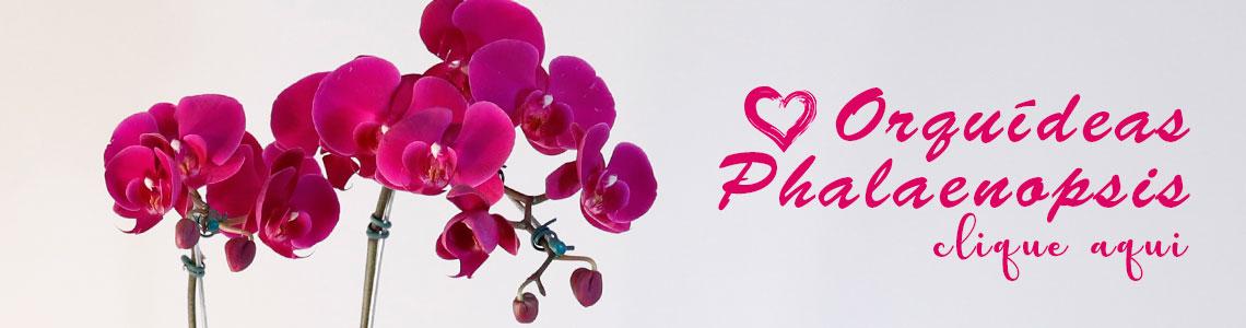 Orquídeas Phale