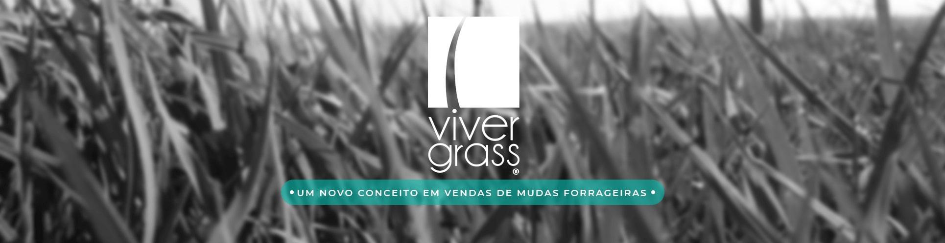 Viver Grass Novo Conceito