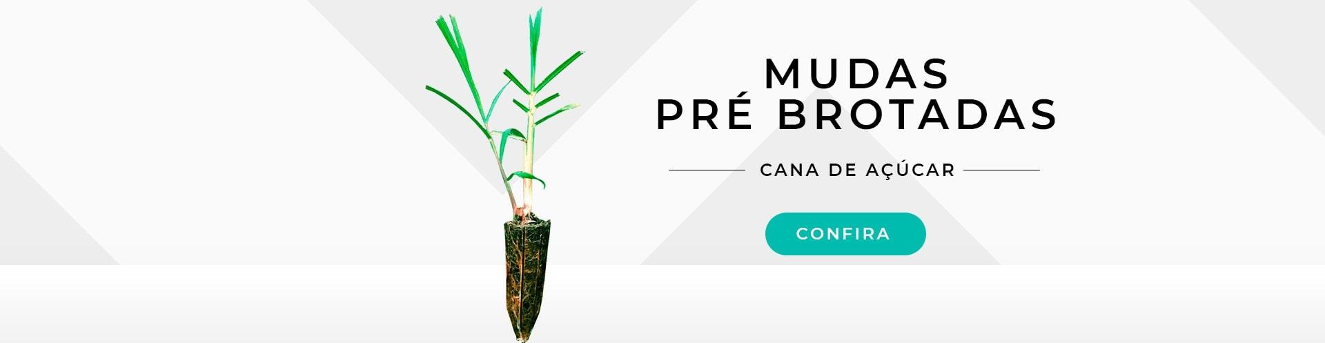 MPB Cana