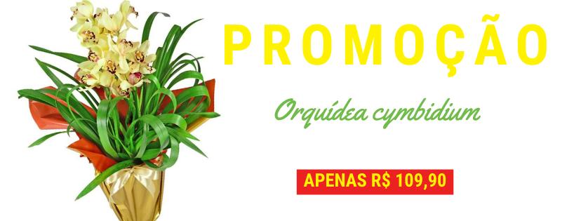 banner orquidea cymbidium