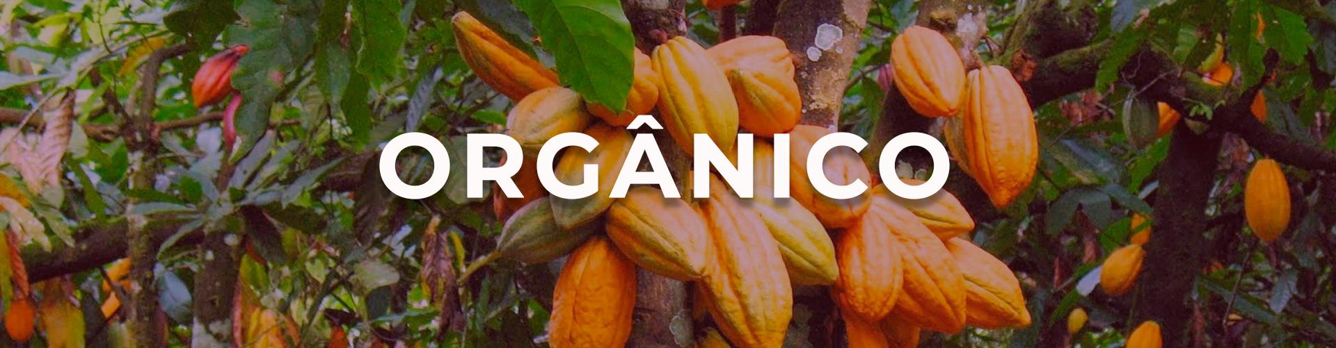 Banner Organico