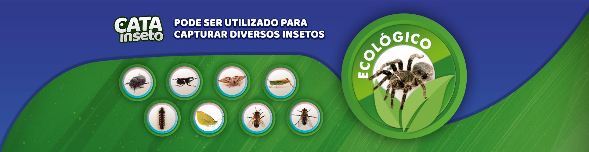 Tipo de inseto