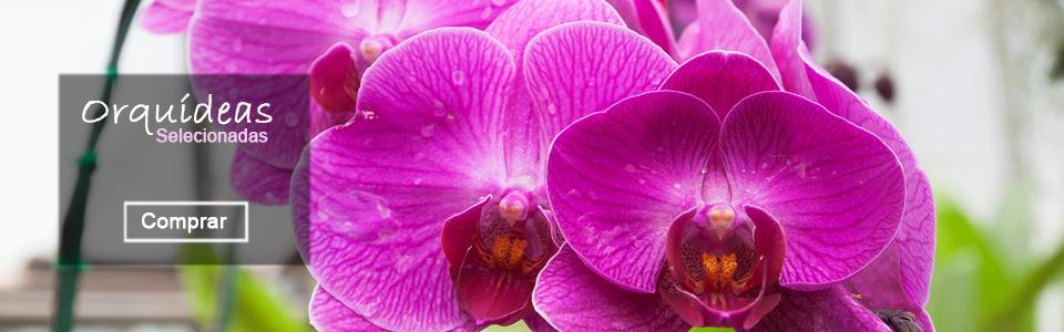 Orchidds