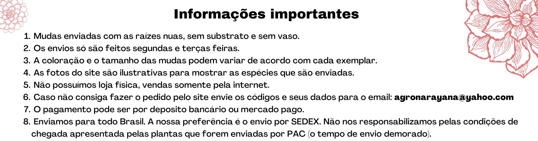 Informações 1