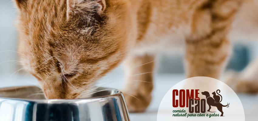 Comida natural Gatos