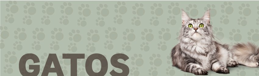 Banner-categoria-gatos
