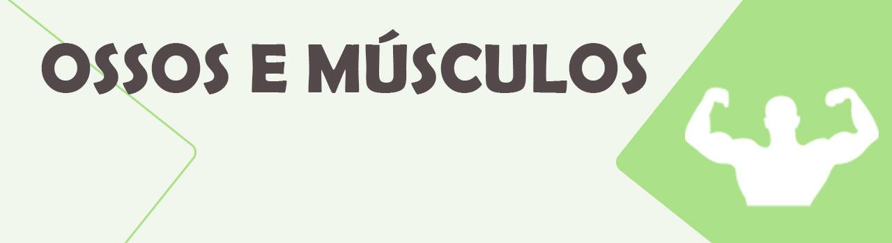 Ossos e Musculos - Vitrine