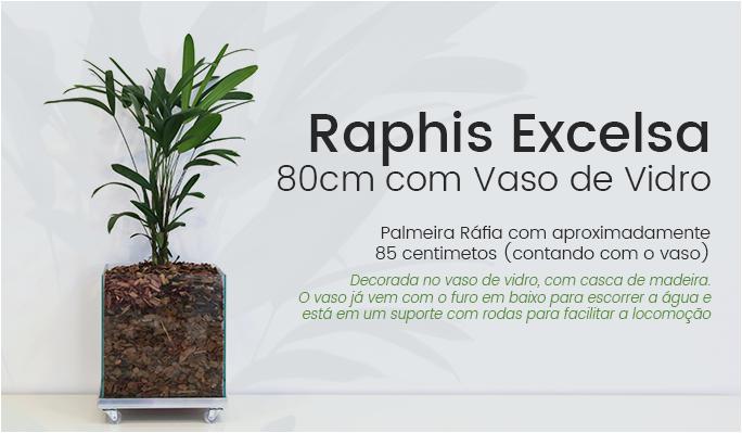 Raphis Excelsa 80cm Vaso de Vidro