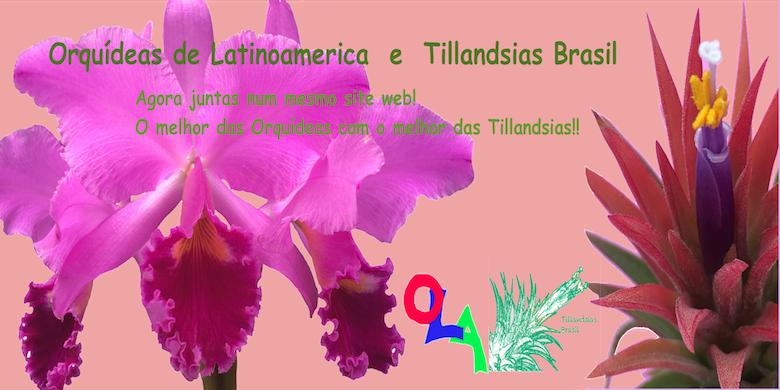OLAorquideas / TillandsiasBRASIL