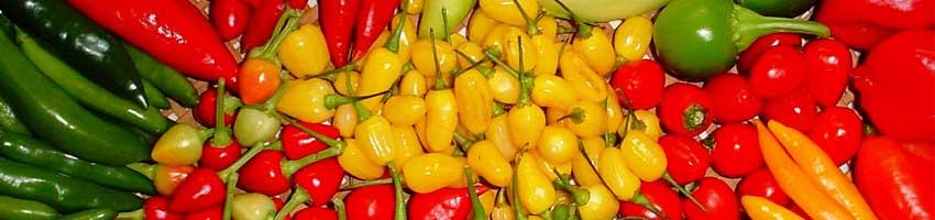 Sessão Sementes de Pimenta