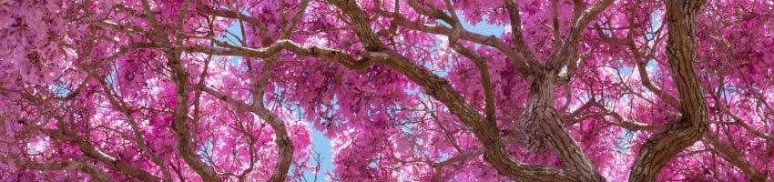 Sessão Sementes de Árvores
