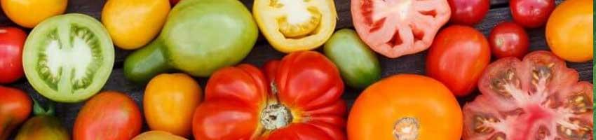 Sessão Sementes de Tomate