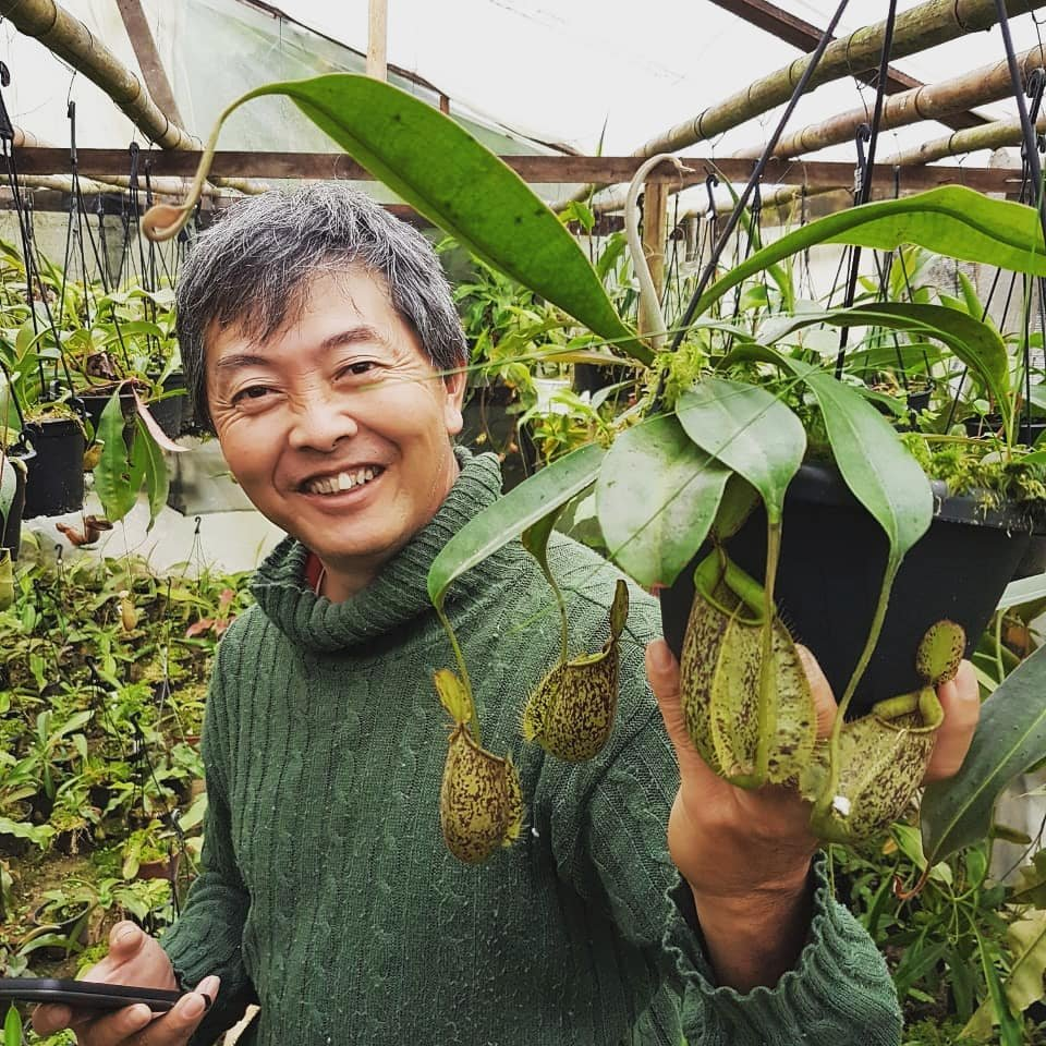 Foto de Marcos Ono, proprietário da Flora Ono, segurando um balde com folhas de sarracenias