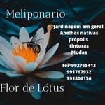 Meliponário Flor de Lotus
