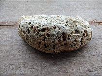 Pedra Coral Morto 1,272kg