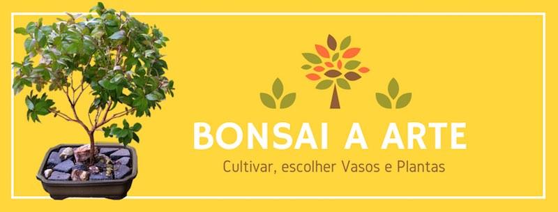 Bonsai e materiais no BomCultivo