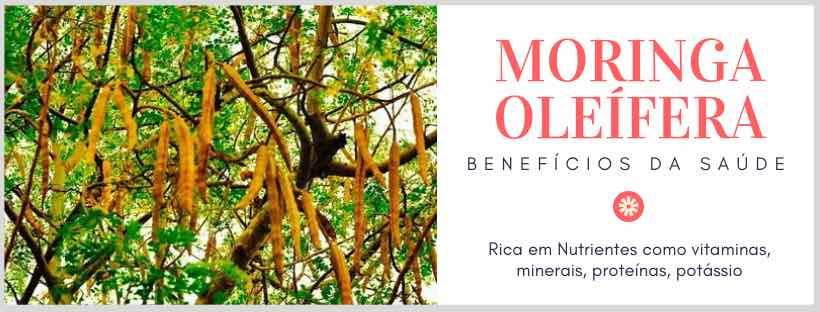 Sementes de Moringa Oleífera no BomCultivo