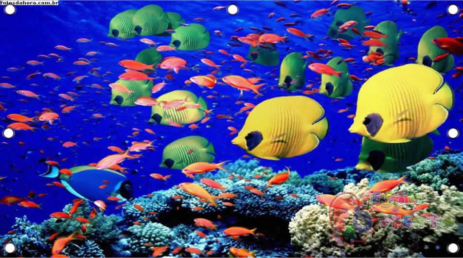 Painel Para Decoração De Festa Infantil Fundo Do Mar Festa Oferta