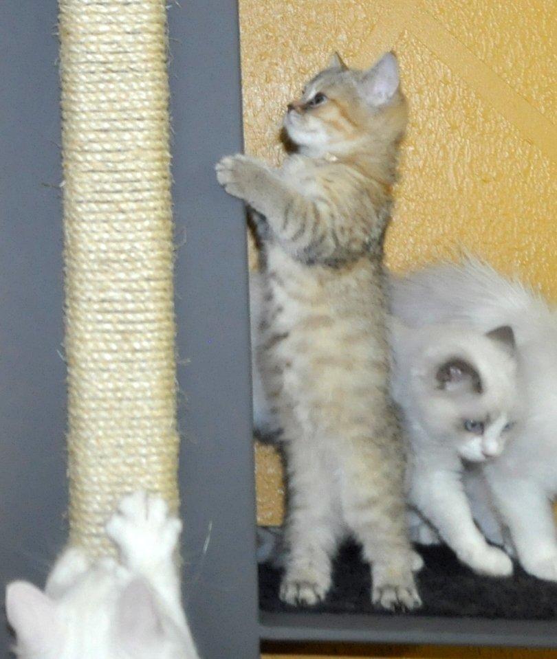 Arranhadores moveis gato - arranhador para gatos
