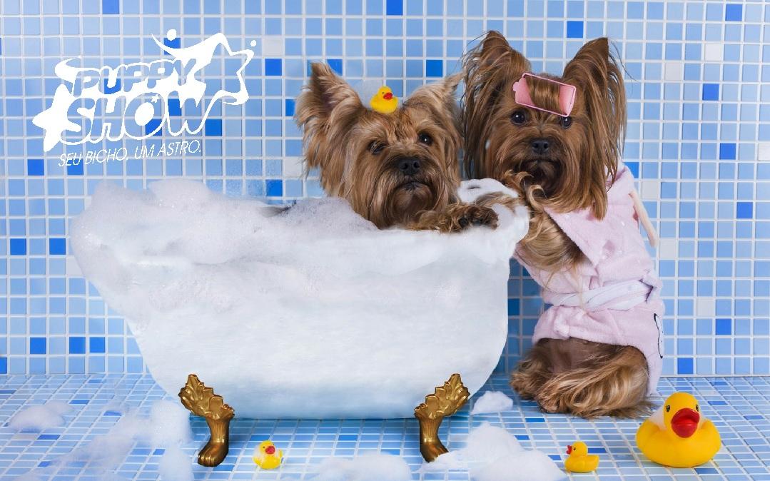 2477b31e2c19 Banho e Tosa - Puppyshow Clínica Veterinária e Pet Center