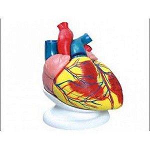Coração ampliado com 3 partes