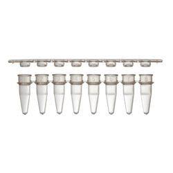 strip tubo para PCR para 8 ou 12 testes